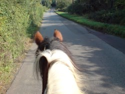 See the Essex Countryside through the Ears of a Horse!